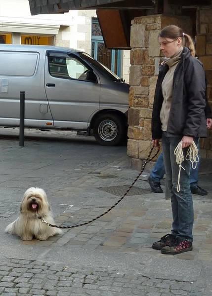conseil dressage chien darret