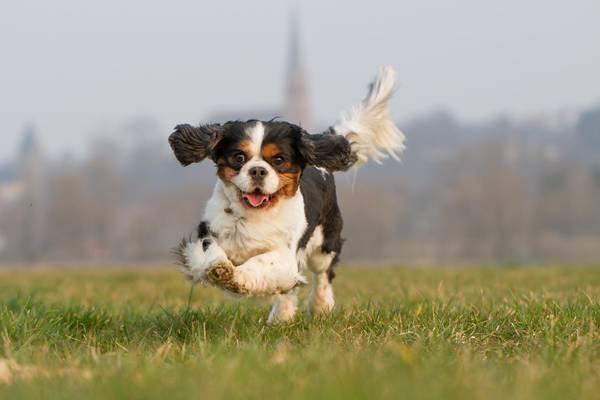 dressage chien en pension