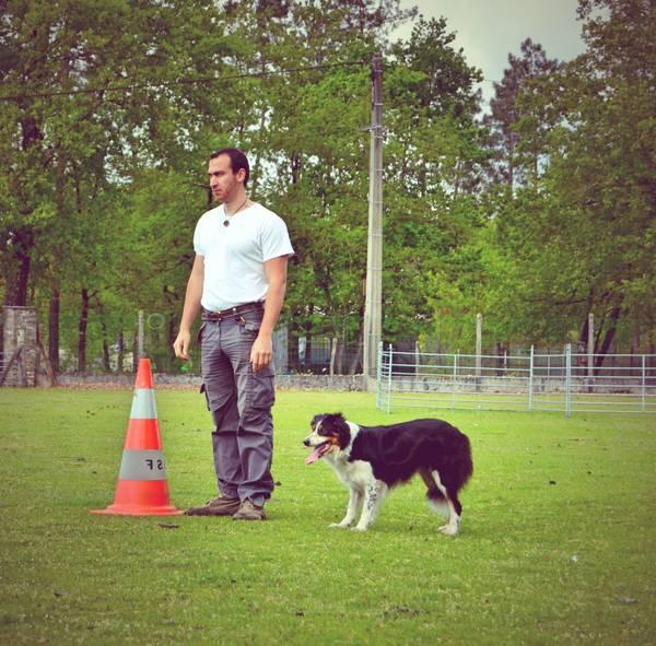 dressage chien de chasse toulouse