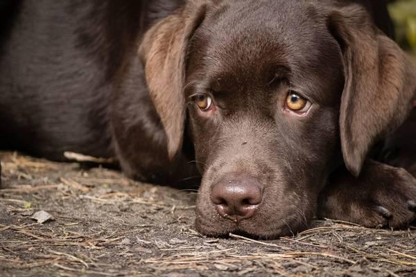 prix dressage chien tarbes