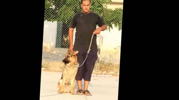 video dressage chien arret
