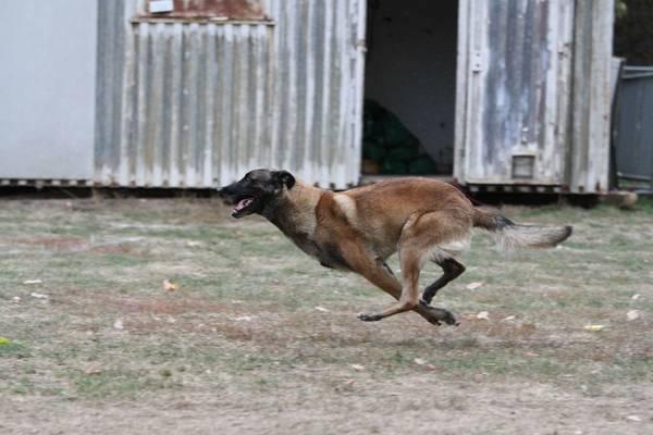 tarif dressage chien bourges