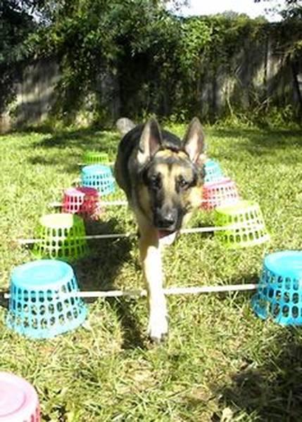 dressage chien 59
