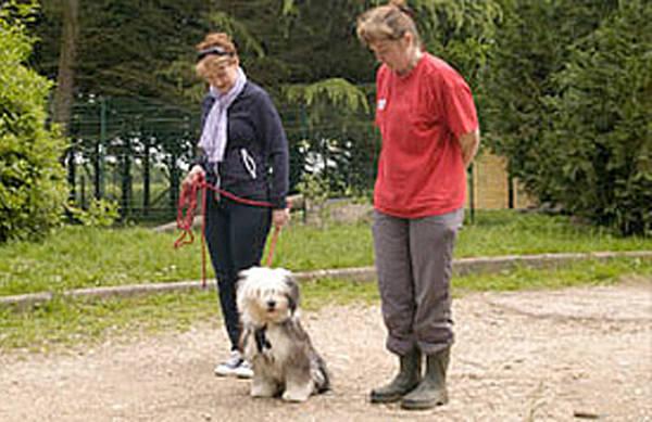 dressage chien de berger allemand