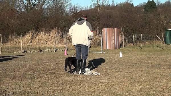 tarif dressage chien dax