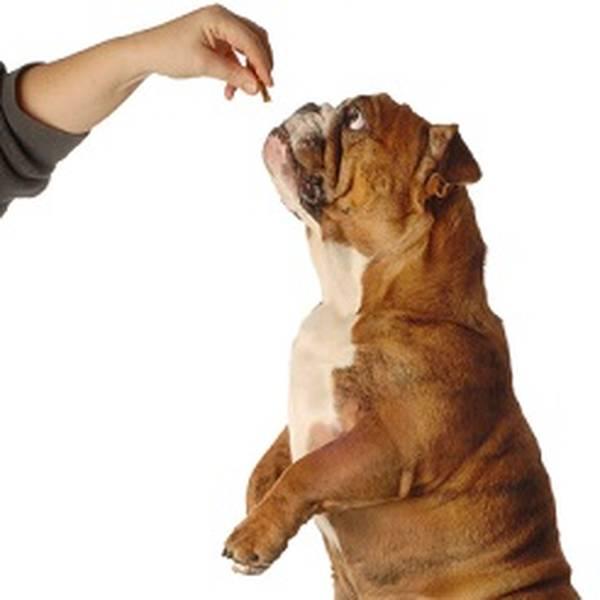 dresser un chien berger allemand/pdf