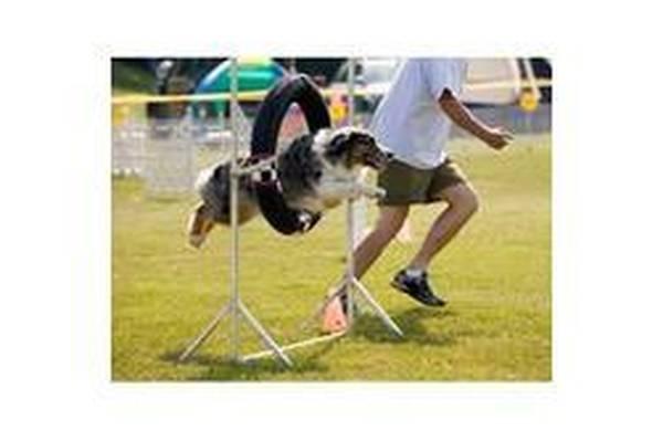 association dressage chien toulouse