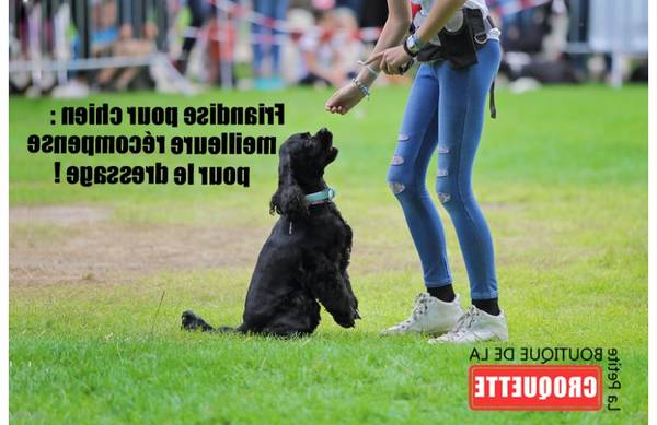 dressage chien poitiers