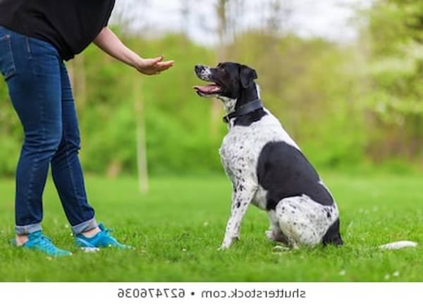 dressage pour chien charleroi