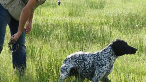 dressage chien freneuse