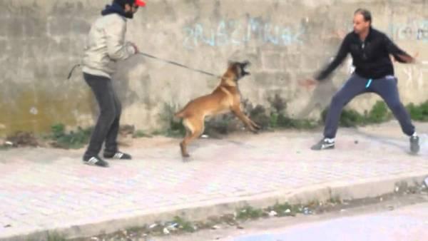 dressage chien loiret