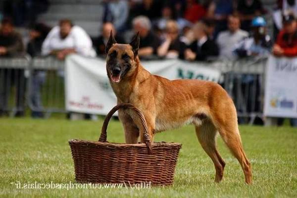 dresseur chien darrêt gard