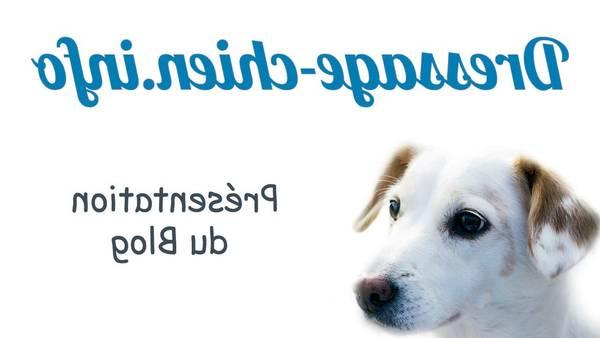 dressage chien waret leveque