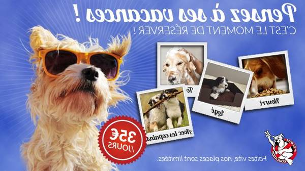 dressage chien targe 86