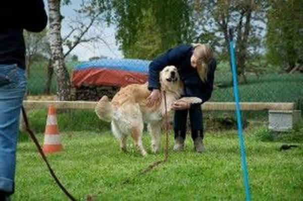 dressage chien guide aveugle
