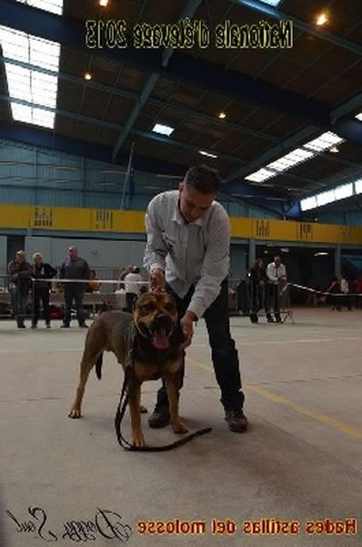 dressage chien saint cyprien
