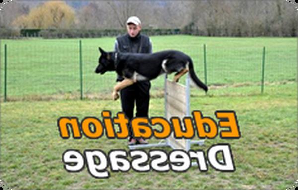 dressage chien avec cage