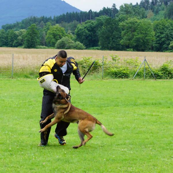 collier de dressage chien de chasse sportdog