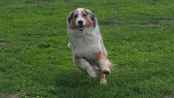 dressage pour chien waterloo