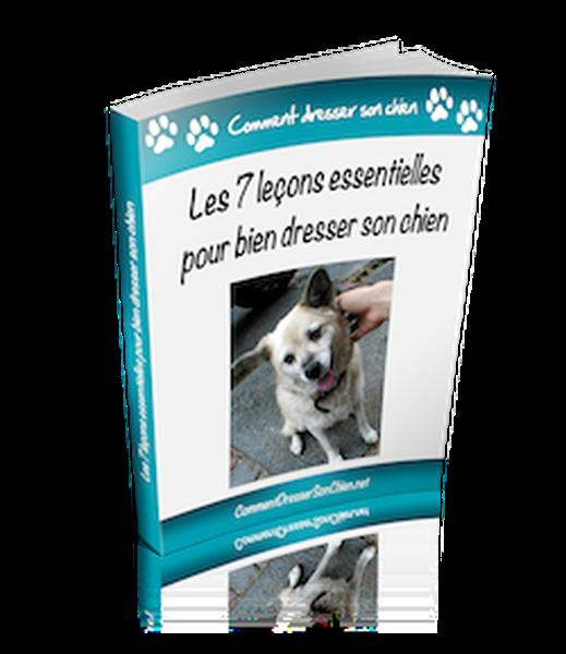 tarif dressage chien de chasse