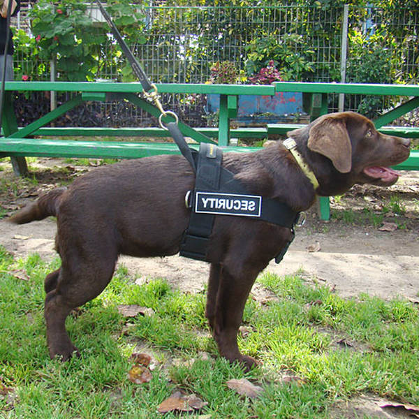 dressage chien goussainville