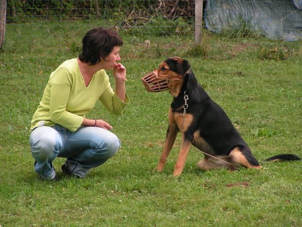 dressage chien balzac besancon