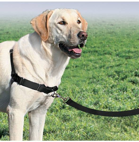 dressage chien bastogne