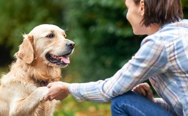 comment dresser chien au rappel