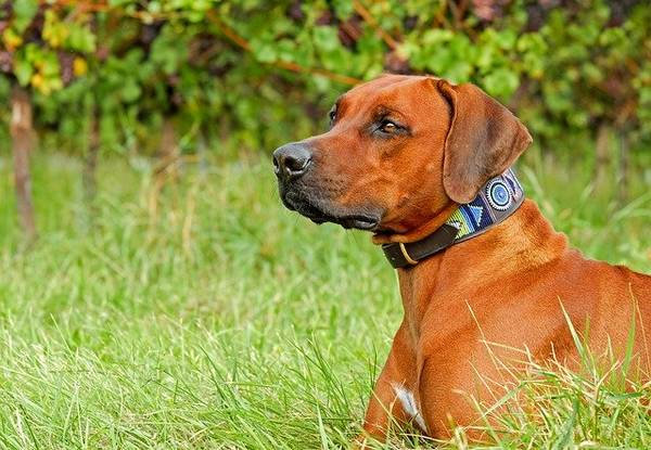 dressage chien poissy 78