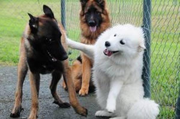 comment dresser chien qui aboie