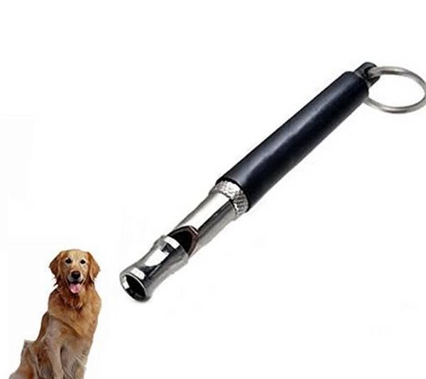 dressage chien neuvy sur loire