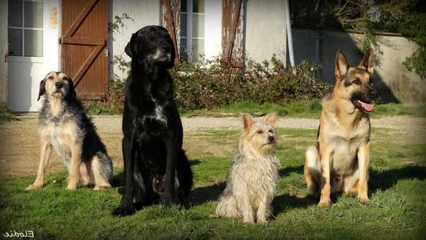 dressage chien pacy sur eure