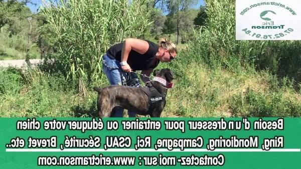 dressage chien chasse bretagne
