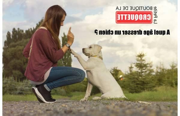 centre de dressage pour chien en tunisie