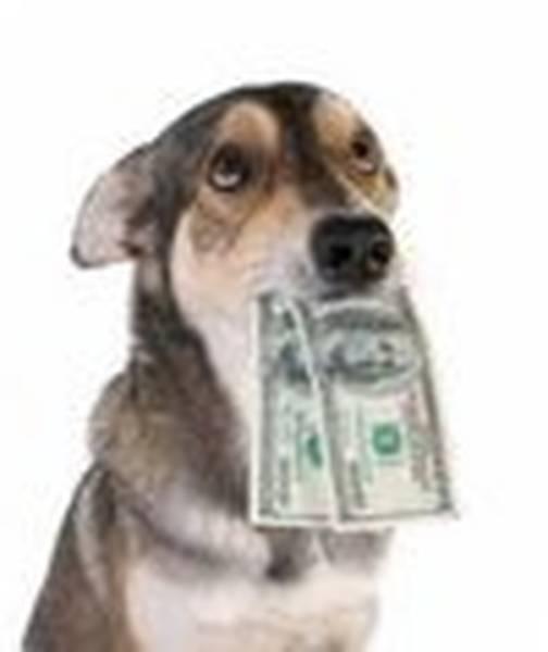 dresseur de chien tunisie prix