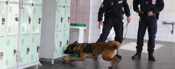 dressage chien de chasse lozere