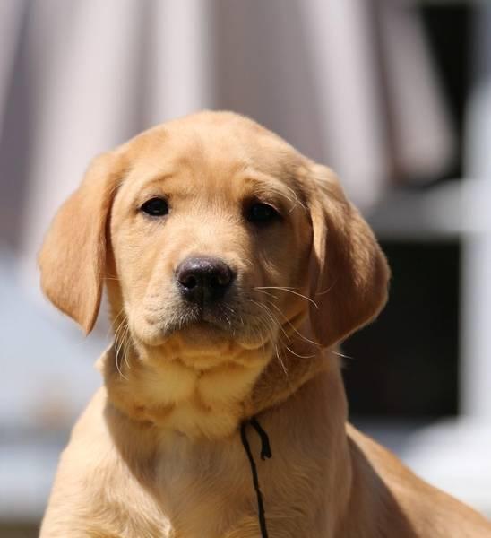 dressage chien rochegude
