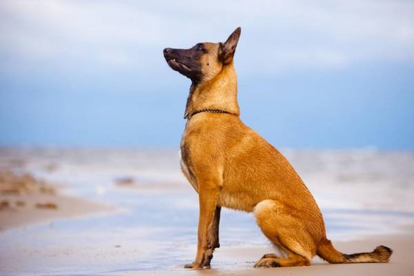 dresseur chien darrêt paca