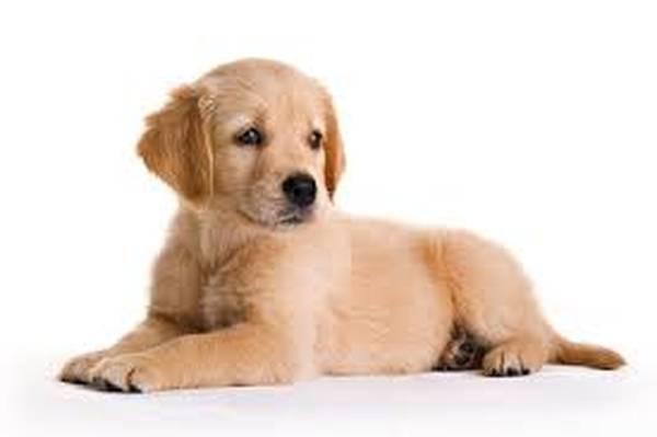 prix dressage chien limoges