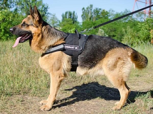 prix dressage chien thionville