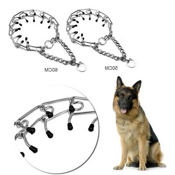 dressage chien tetouan