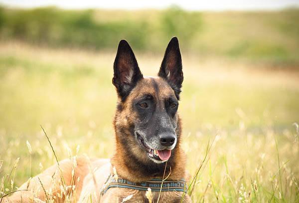 centre de dressage pour chien brabant wallon