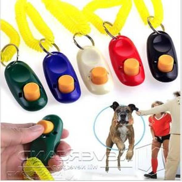 dressage chien tunisie prix