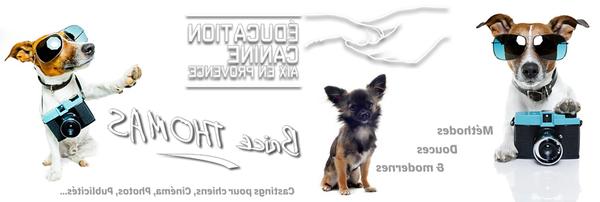 comment dresser chien avec collier electrique
