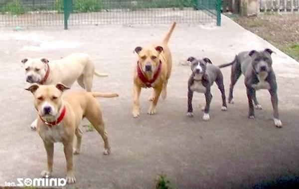 dressage chien detection