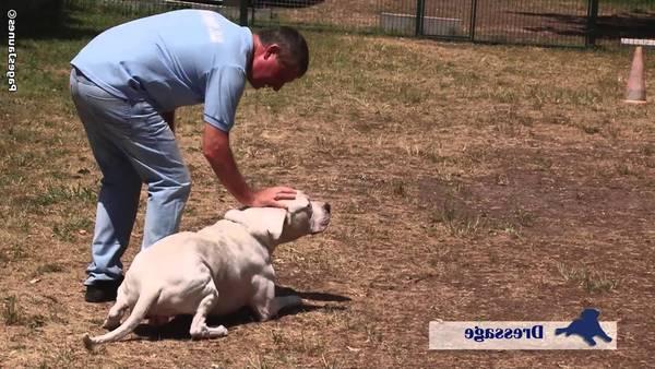 dressage chien recherche de personne