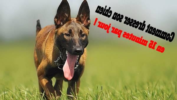 dressage chien en tunisie