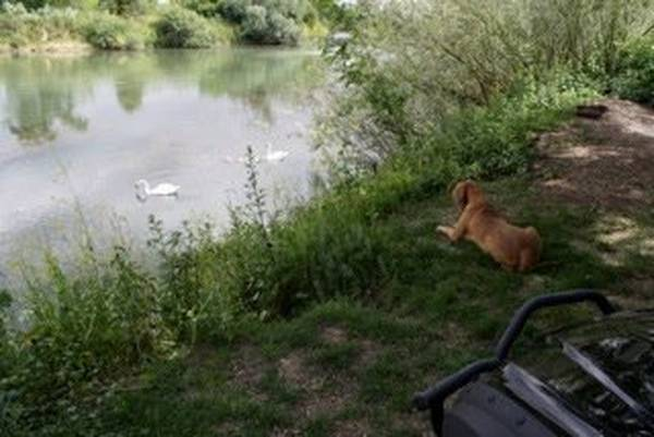 dressage chien de chasse pas de calais