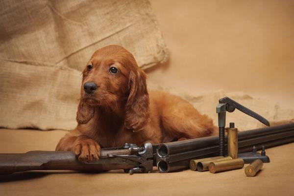dressage de chien khemis miliana