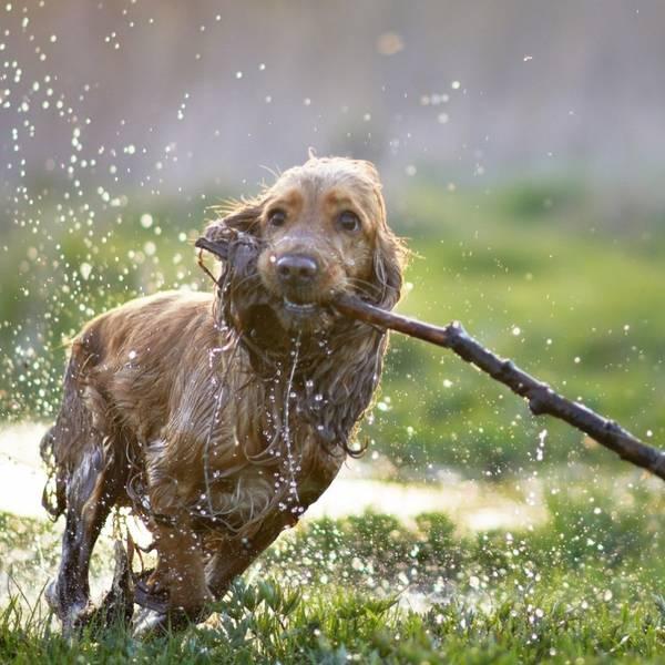 dressage de chien laval